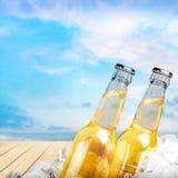 Пивные бутылки в льде на светлой предпосылке Стоковые Фото