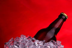 Пиво в кубах льда Стоковые Изображения