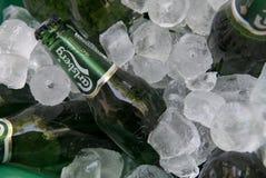 Пиво Карлсбурга на льде Стоковое фото RF