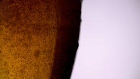 Пиво полило внутри стекло на белой предпосылке в замедленном движении с космосом экземпляра на праве сток-видео