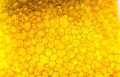 Пиво пузыря Стоковые Изображения