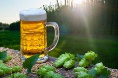 Пиво Glas с конусами хмеля Стоковая Фотография RF