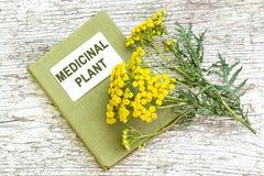 Пижма (vulgare Tanacetum) и лекарственное растение каталога Стоковое Изображение