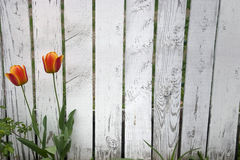 пикетчик загородки стоковое фото rf
