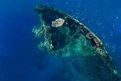 Пикирование человека Freediver в кораблекрушении стоковое изображение