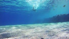 Пикирования молодого человека свободные Snorkeling и плавая через рамку, подводный взгляд в Красном Море, Египте видеоматериал