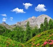пики доломита rosengarten Стоковая Фотография RF