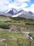 Пики Snowy и малые сосны Стоковое фото RF