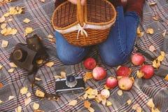 Пикник в лесе осени стоковые изображения rf