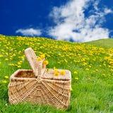пикник лужка одуванчика корзины Стоковое Изображение
