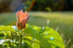 Пиковая листва Стоковые Фотографии RF