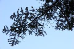 Пиковое дерево от нижнего взгляда стоковое фото rf
