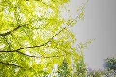 Пиковое дерево от нижнего взгляда стоковые фото