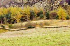 Пиковый Greenfield резервуара Dovestone района, Англия, Великобритания стоковые фотографии rf