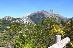 Пик горы вполне деревьев в Канфранке Стоковое Фото