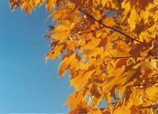 пик листва падения Стоковые Изображения