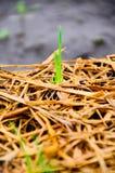 Пик семени сои на том основании и держит затишье Стоковое Изображение
