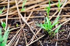 Пик семени сои на том основании и держит затишье Стоковые Изображения