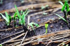 Пик семени сои на том основании и держит затишье Стоковые Фото