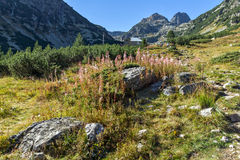 Пик цветков и Malyovitsa, гора Rila Стоковое Изображение