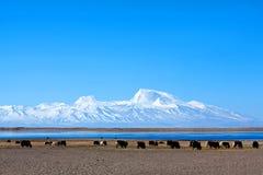 Пик Gurla Mandhata в Тибете стоковое изображение rf