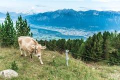Пик Patscherkofel около Инсбрука, Тироля, Австрии Стоковое Фото