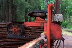 Пила древесины logon ствола дерева в лесе Стоковые Изображения