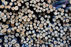 Пиломатериал круга текстуры деревянный для конструкции Стоковые Изображения