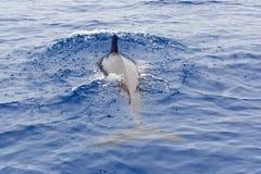 пилотный кит Стоковые Изображения