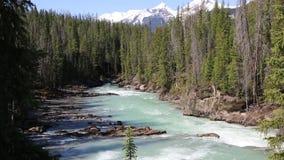Пинать реку лошади видеоматериал