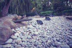2 пингвина в зоопарке Стоковая Фотография