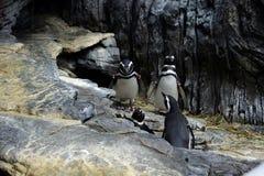 Пингвины в аквариуме Стоковое Фото
