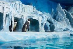 Пингвины в декоративной пещере в oceanarium стоковые фотографии rf