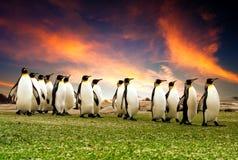 пингвины в марше Стоковые Изображения RF