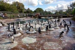 Пингвины вложенности Стоковое фото RF