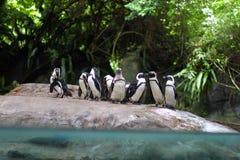 Пингвины группы Стоковое фото RF