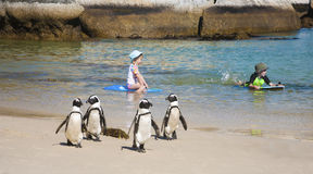 Пингвины и дети Стоковое Изображение RF