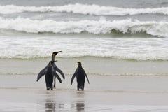 пингвины короля 3 Стоковые Изображения RF