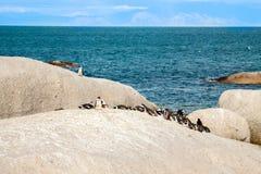 Пингвины на пляже Атлантического океана в Южной Африке Стоковые Фото