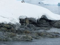 Пингвины тянут из моря по мере того как лед начинает плавить Стоковые Изображения