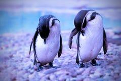 Пингвины Стоковое Изображение