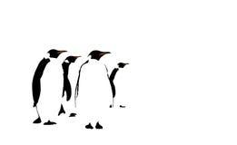 Пингвины иллюстрация штока