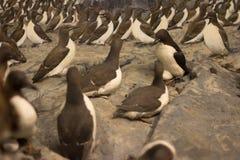 пингвины стоковое изображение rf