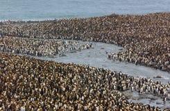 пингвины Стоковое фото RF