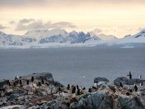 Пингвины Chinstrap острова полумесяца, Антарктика Стоковые Фото