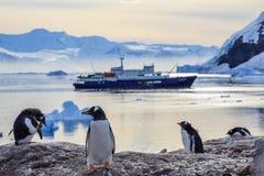 Пингвины Gentoo стоя на утесах и туристическом судне Стоковое Изображение RF