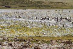 Пингвины - Magellan и Gentoo Стоковое Фото