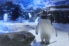 Пингвин Антарктика аквариума стоковое фото