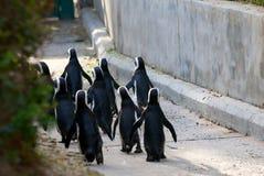 пингвин в марше Стоковое Изображение