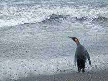 Пингвин короля на пляже, Южной Георгие Стоковое Изображение